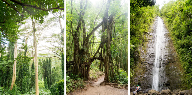 Manoa Falls Oahu Hawaii | Culinary Cool